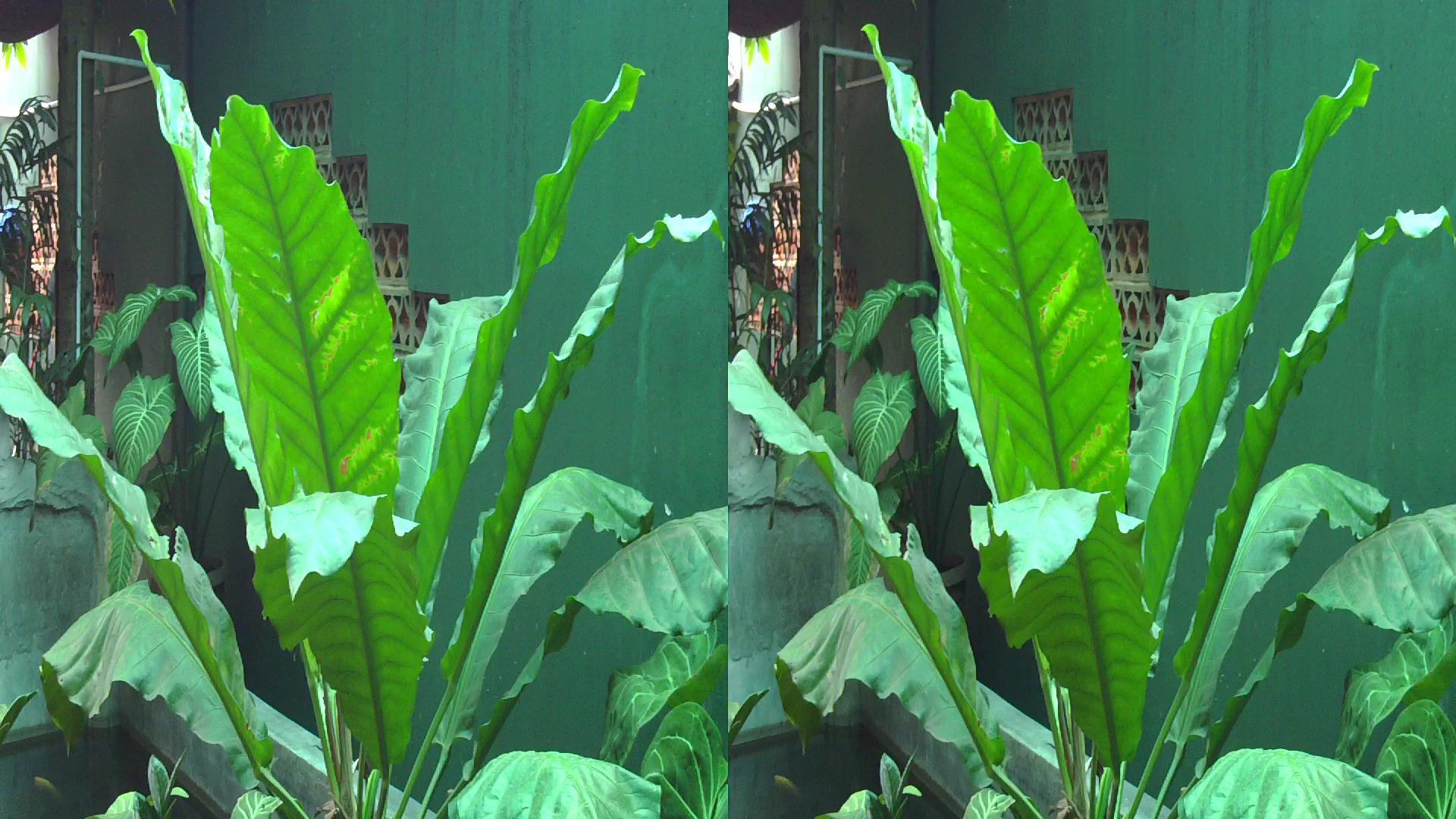 citra stereoskop berbagi info dari ke penggemar gambar 3